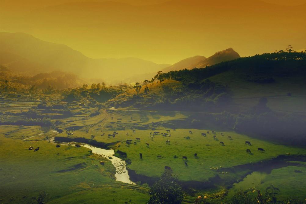 SPIRITUÁLNÁ JUŽNÁ INDIA<br>  DEŇ 6: MUNAR<br>  - Ecotones Camps<br>  - Prechádzka horskou dedinou<br>