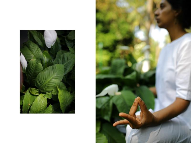 AJURVÉDA A JÓGA <br>-<br>V sanskrte sa dá slovo jóga preložiť ako spojenie. Jóga nás učí, že všetky aspekty života sú prepojené - individuálne ja s univerzálnym bytím - a jedine realizáciou a zážitkom tejto úplnosti môžeme uspokojiť náš vnútorný hlad po múdrosti a trvalom šťastie. Spojenie vyššieho ja je nemožné bez zdravého tela, pevnej mysle a plného vedomia, čo sú princípy ajurvédy.